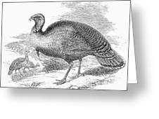 Wild Turkey, 1853 Greeting Card