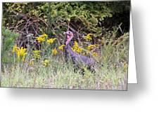 Wild Turkey - Gobbler - Thanksgiving Greeting Card