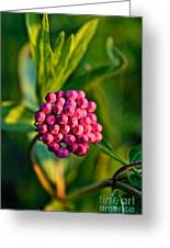 Wild Weed Greeting Card