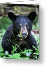 Wildflower Bear Greeting Card
