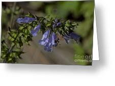 Wildflower Beauty Greeting Card