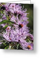Wildflower Days Greeting Card