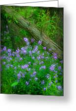Wildflower Dreams Greeting Card