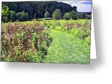 Wildflower Field Afternoon Greeting Card