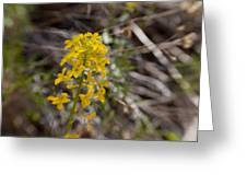 Wildflower On The Trail Greeting Card