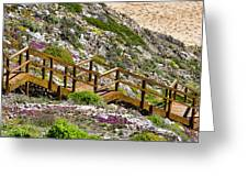 Wildflower Steps Greeting Card