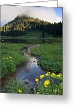 Wildflower Stream Greeting Card
