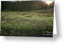 Wildflower Sunburst One Greeting Card