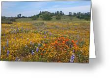 Wildflower Wonderland 8 Greeting Card