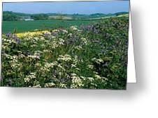 Wildflowers, Near Seaforde, Co Down Greeting Card