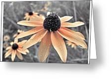 Wildflowers Of Ontario Greeting Card