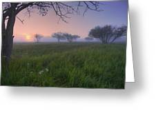 Wildflowers On A Foggy Pasture Greeting Card