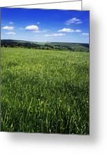 Wildflowers On A Landscape, Connemara Greeting Card