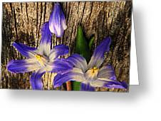 Wildflowers On Wood Greeting Card