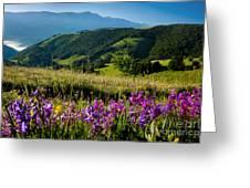 Wildflowers Umbria Greeting Card
