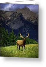 Wildlife In The Mountains Greeting Card