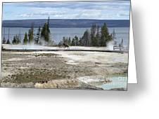 Wildlife In Yellowstone Greeting Card