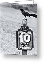 Wildlife Watching The Speed Limit Greeting Card