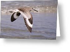 Willet In Flight Greeting Card