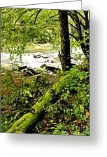 Williams River Greeting Card by Thomas R Fletcher