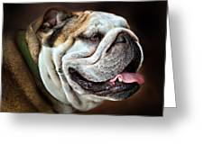 Willie Loves Me An English Bulldog Greeting Card by Dorothy Walker