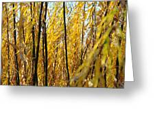 Willow Curtain Greeting Card