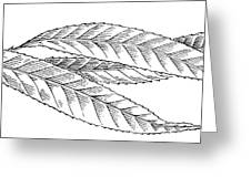 Willow Leaves, Woodcut Greeting Card