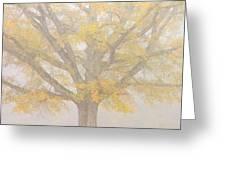 Willow Oak In Fog Greeting Card by Bill Swindaman