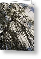 Willow Tree Greeting Card by Todd Sherlock