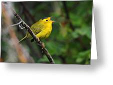 Wilsons Warbler In Song Greeting Card