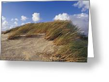 Wind Blown Grass Tussocks Precariously Greeting Card