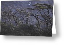 Wind-sculpted Southern Beech Forest Greeting Card