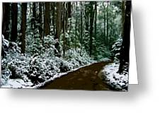 Winding Forest Trail In Winter Snow Greeting Card