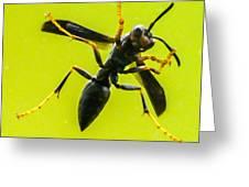 Window Wasp Greeting Card