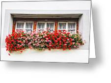 Windows With Red Flowers Greeting Card