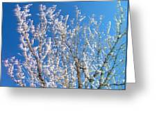 Winds Upon The Branchs Greeting Card