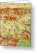 Windy Poppies Greeting Card