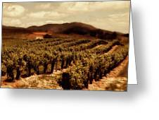 Wine Country Greeting Card by Peter Tellone