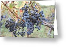 Wine Grapes In Provence Greeting Card