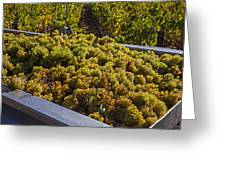Wine Harvest Greeting Card by Garry Gay