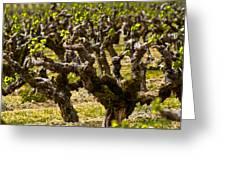 Wine On The Vine Greeting Card