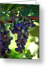 Wine To Be Greeting Card