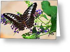 Wing Of Beauty Greeting Card