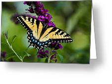 Wings Of Hope Greeting Card