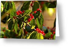 Winter Bird Treet Greeting Card