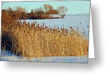 Winter Breeze Greeting Card by Aimee L Maher Photography and Art Visit ALMGallerydotcom