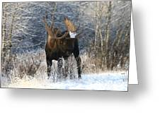 Winter Bull Greeting Card