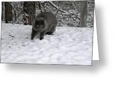 Winter Cat Greeting Card