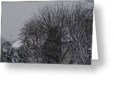 Winter Cold Branches Greeting Card