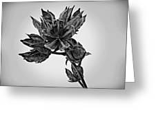 Winter Dormant Rose Of Sharon - Bw Greeting Card